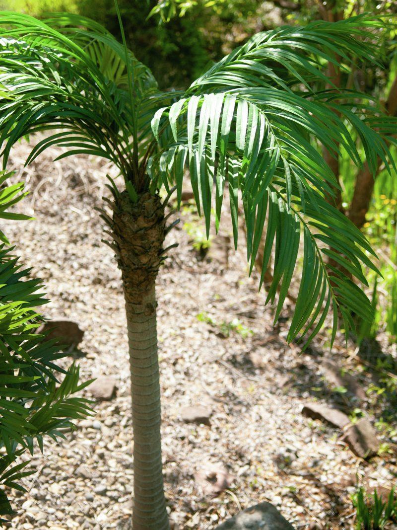 palmier-artificiel-300cm-16