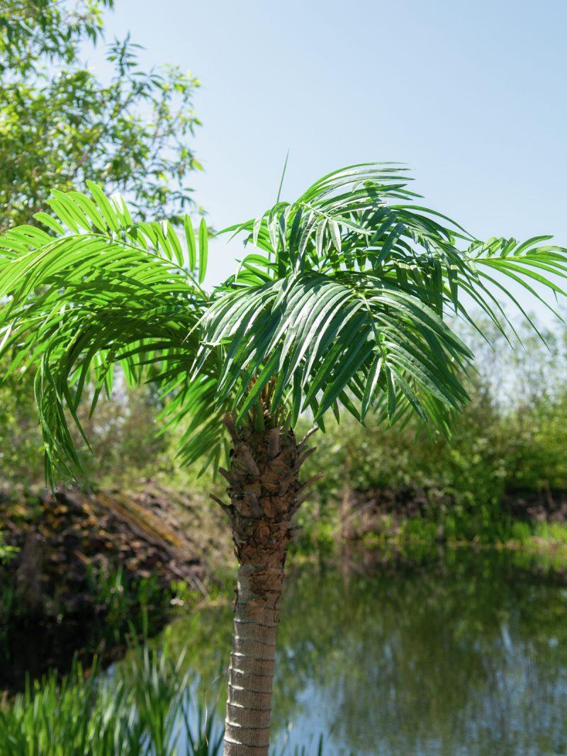 palmier-artificiel-300cm-4