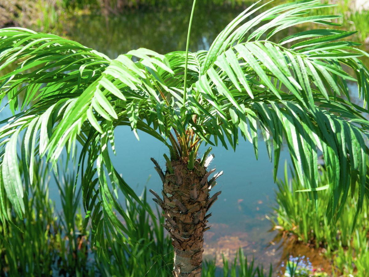 palmier-artificiel-300cm-8