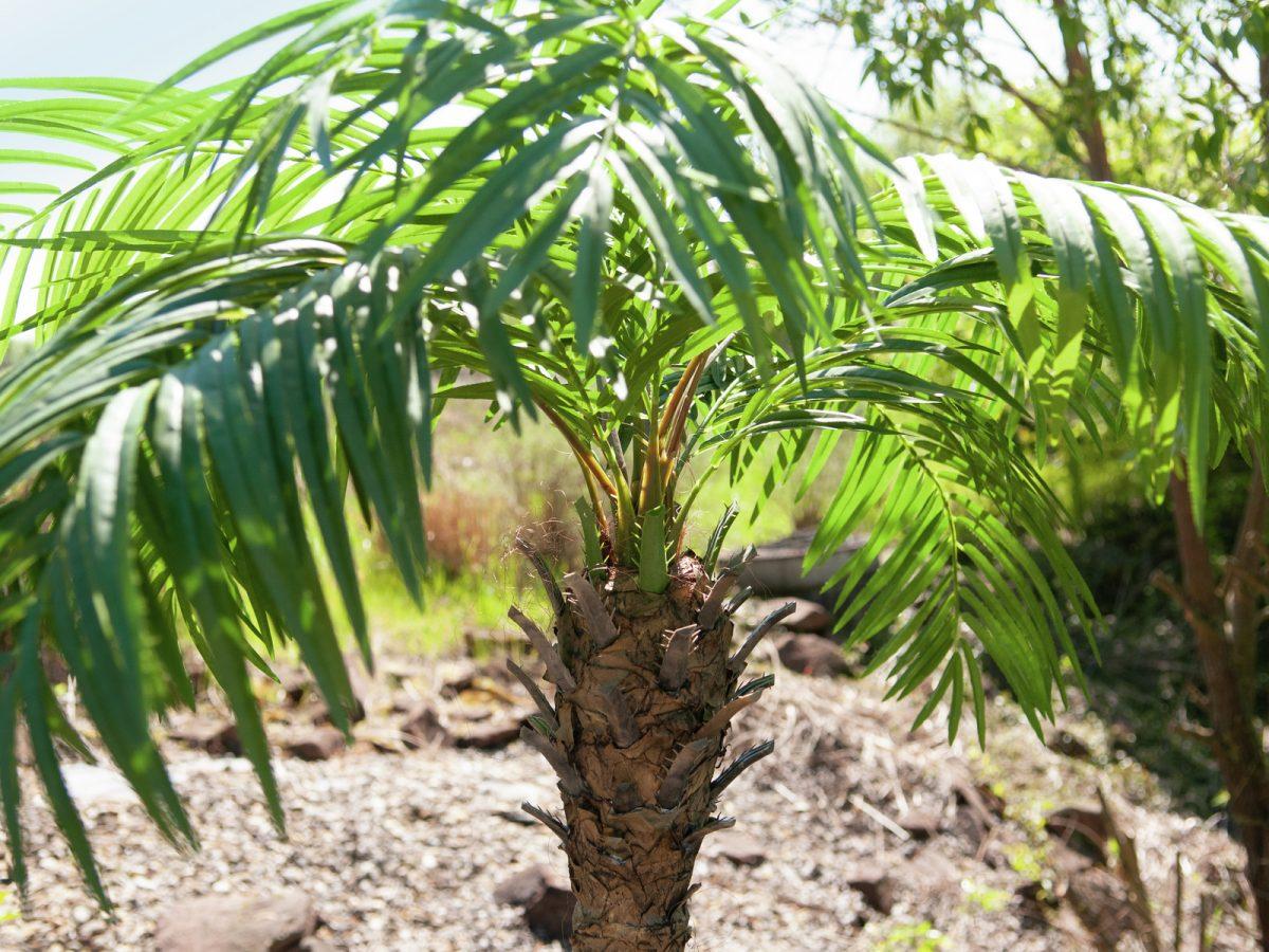 palmier-artificiel-300cm-9