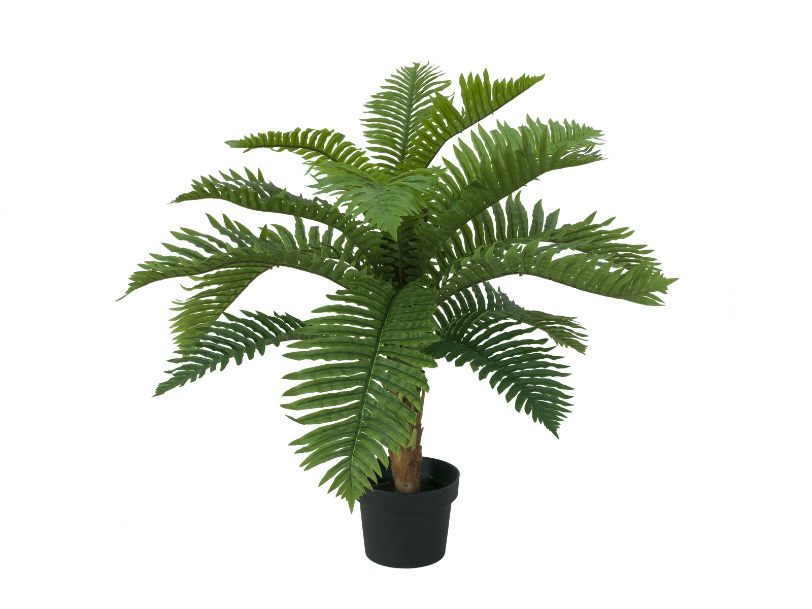cycas-artificiel