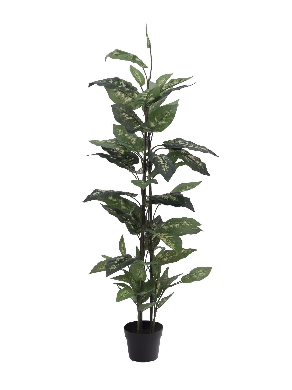 dieffenbachia-120cm