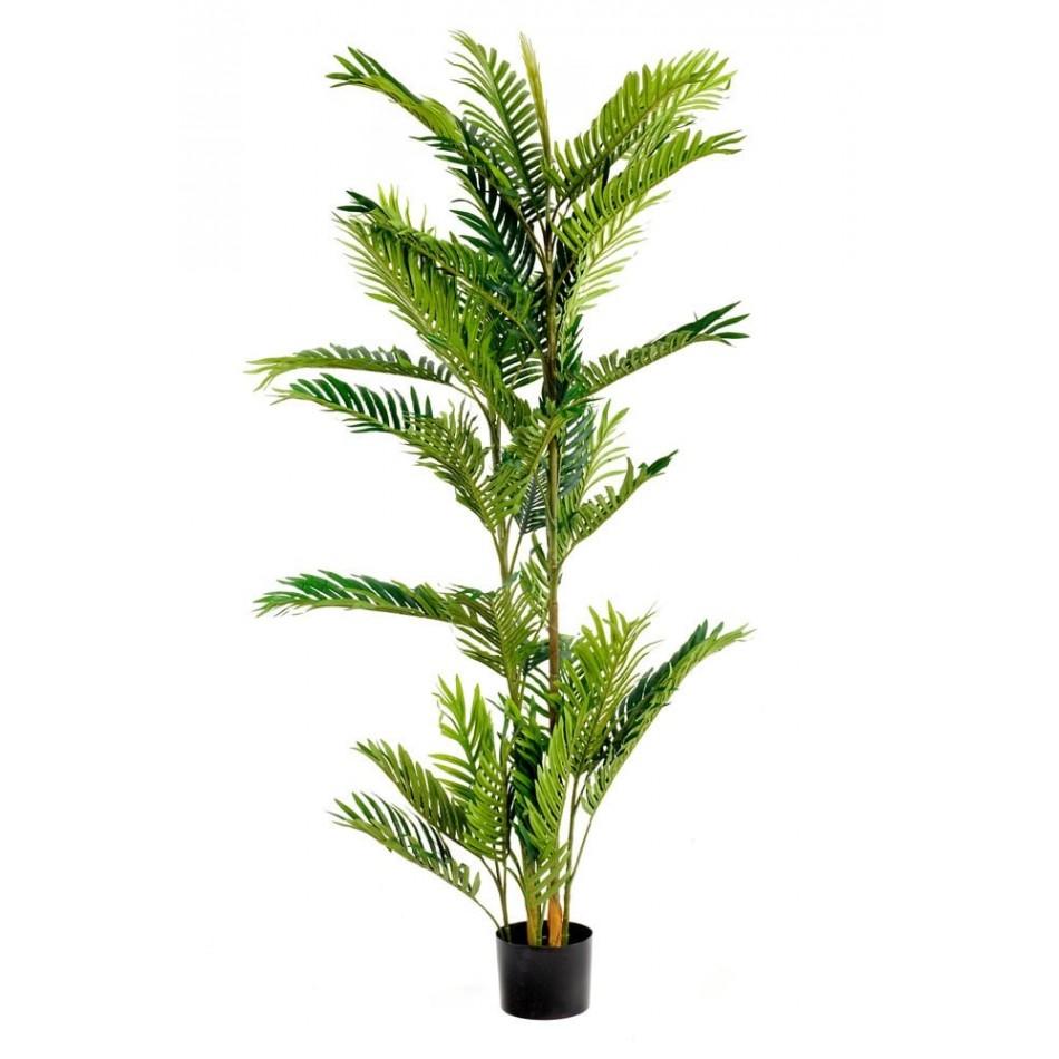 faux-palmier-cycas