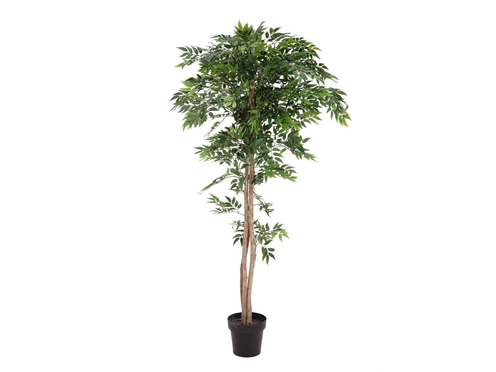 ficus-longifolia-150cm