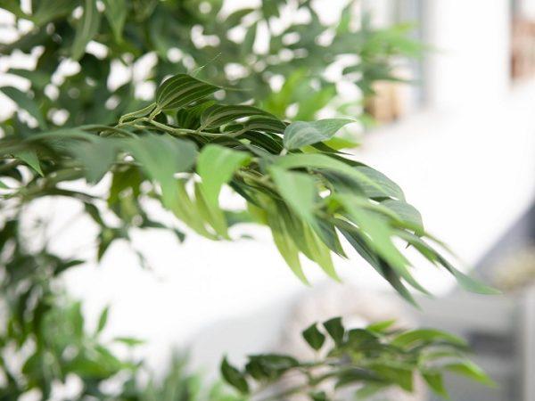 ficus-longifolia-artificiel-6