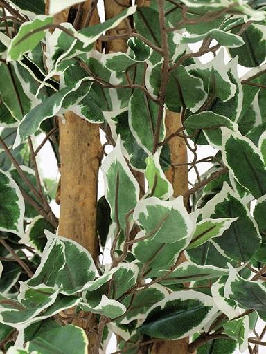 ficus-variegata-artificiel-2