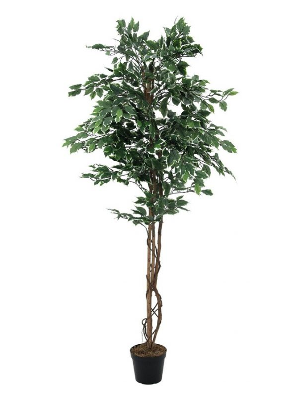 ficus-variegata-artificiel