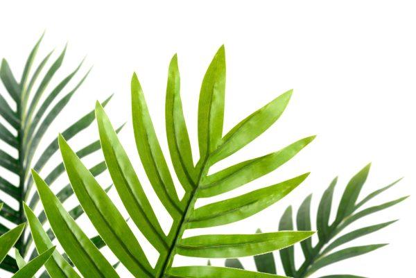 palmier-artificiel-intérieur-extérieur