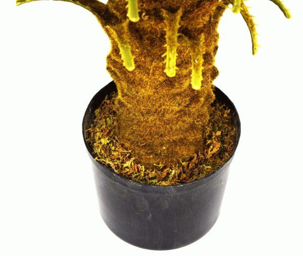 palmier-cycas-tronc