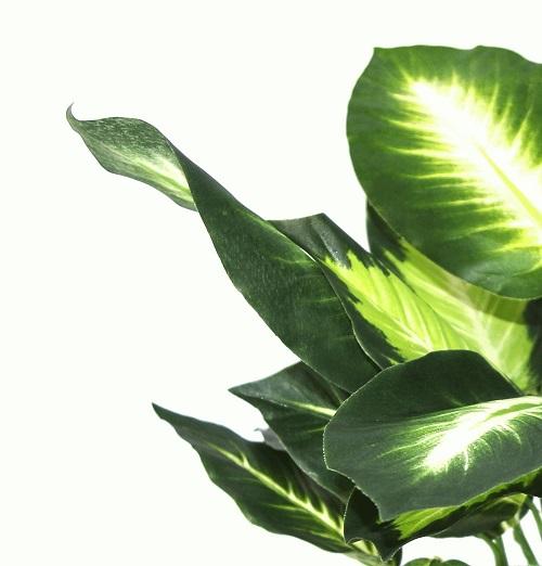plante-verte-artificielle-dieffenbachia