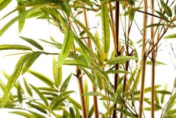 bambou-artificiel-exterieur