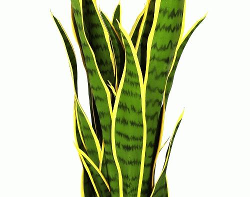 plante-artificiel