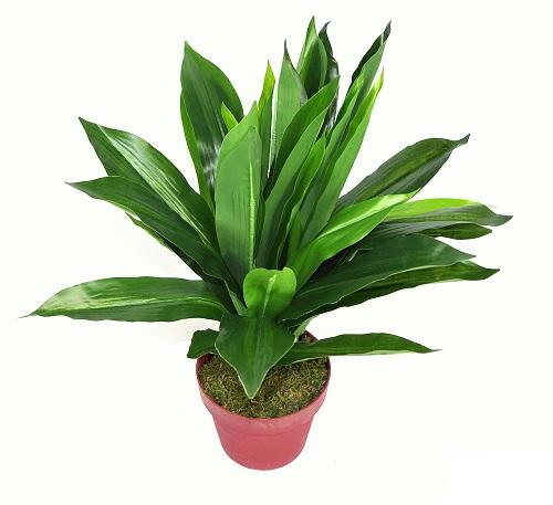 plante-artificielle-dracaena