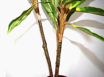 plante-grasse-artificiel-dracena