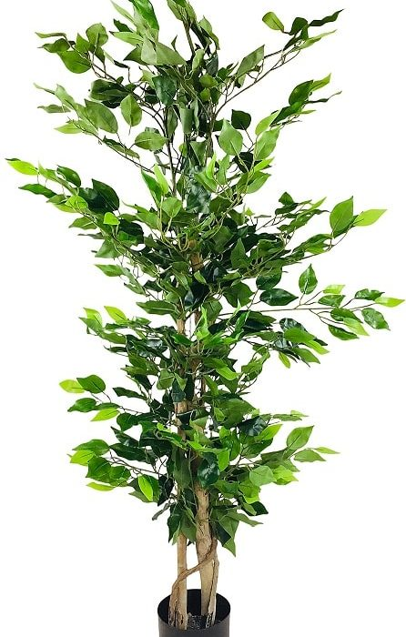 plante-grasse-artificielle-ficus
