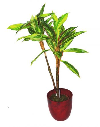 plante-plastique-dracaena
