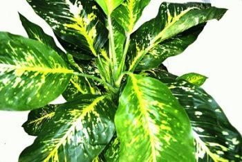 plantes-artificielles-pour-balcon