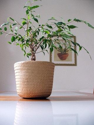 blog-pourquoi-choisir-plante-artificielle