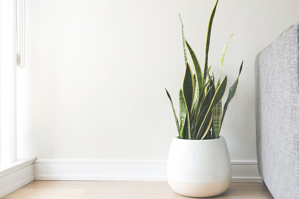 plantes-artificielles-floranet