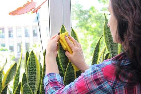 comment-nettoyer-plante-artificiel