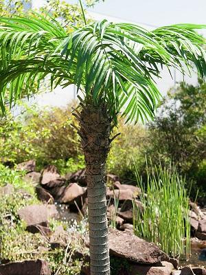 palmier-artificiel-300cm-6