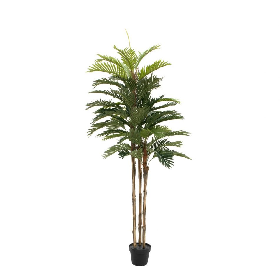 palmier-kentia-150-cm-1