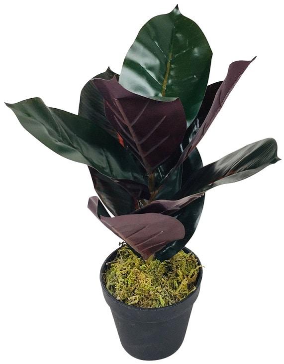 plante-caoutchouc-artificielle