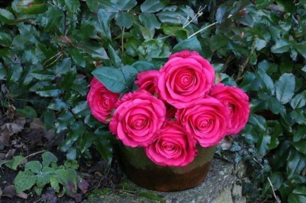 rose-artificielle-fushia