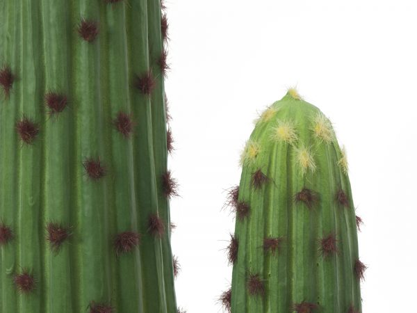 cactus-artificiel-truffaut