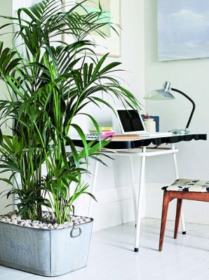 blog-plantes-artificielles