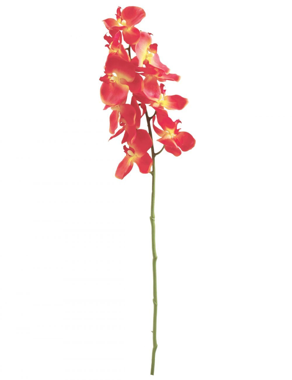 branche d'orchidee-orange