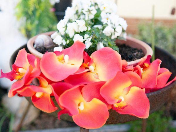 branche d'orchidee-orange
