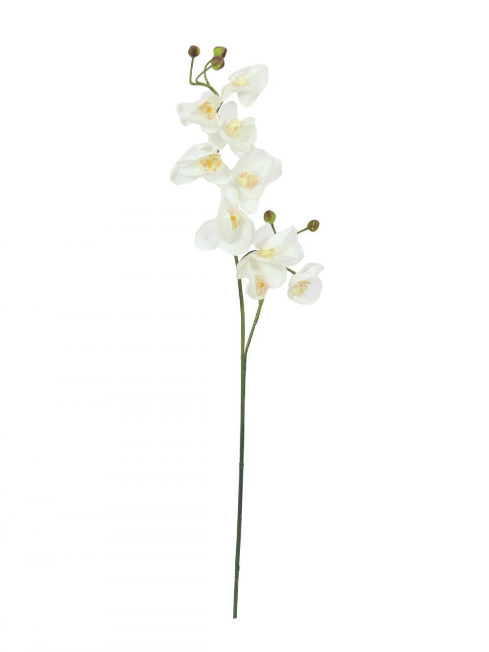 branche-orchidee-artificielle-blanche