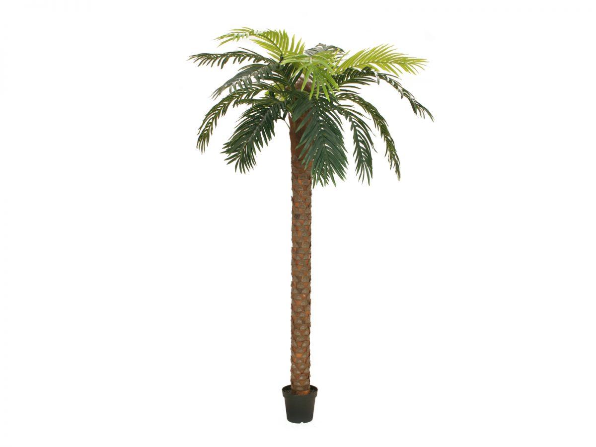 palmier-phoenix-artifici