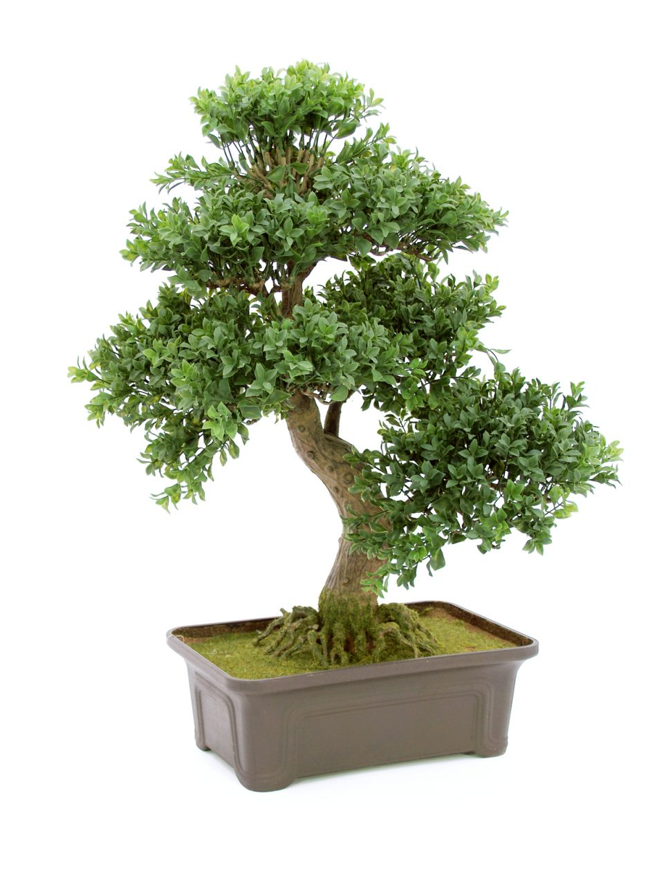 petit-bonsai-artificiel