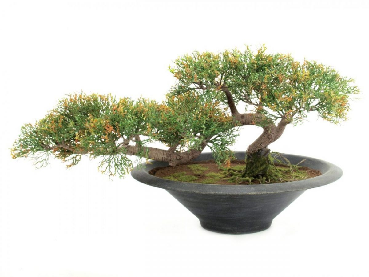 bonsai-cedre-artiificiel