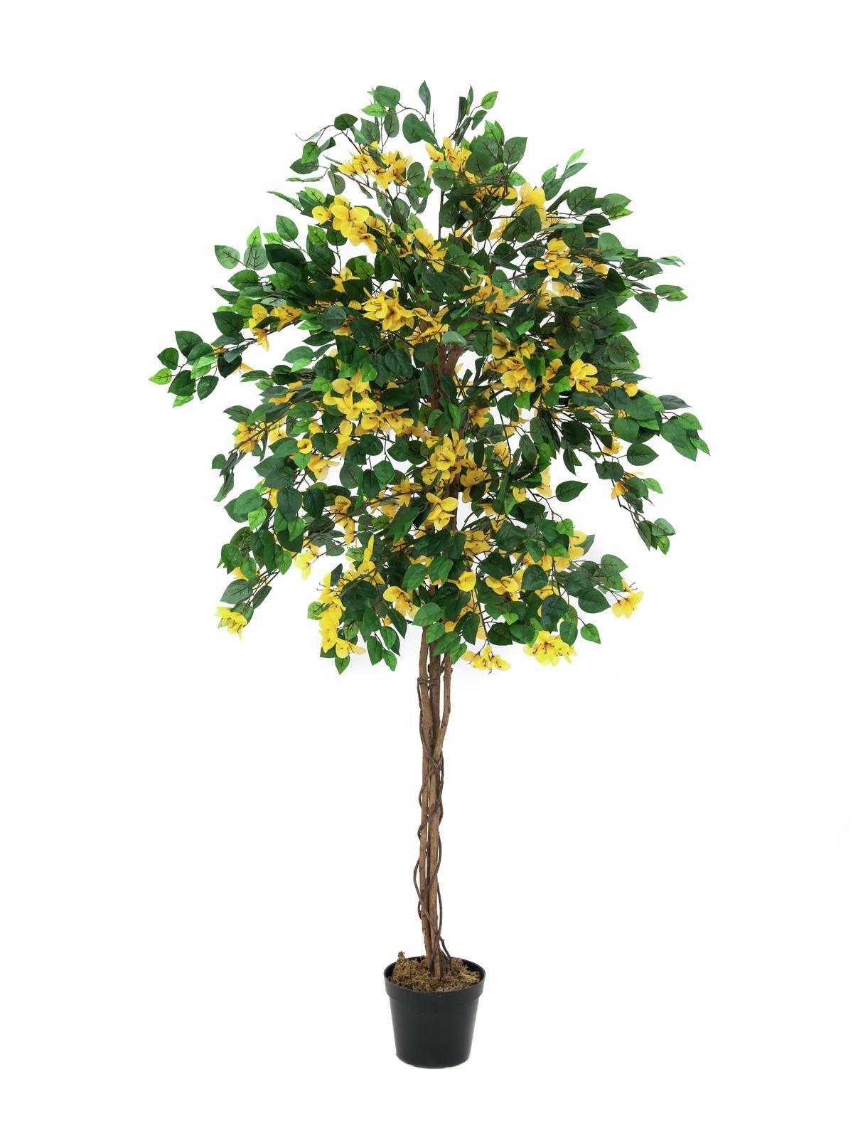 bougainvillier-jaune-180cm