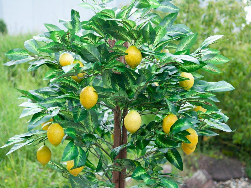 citronnier-artificiel-5