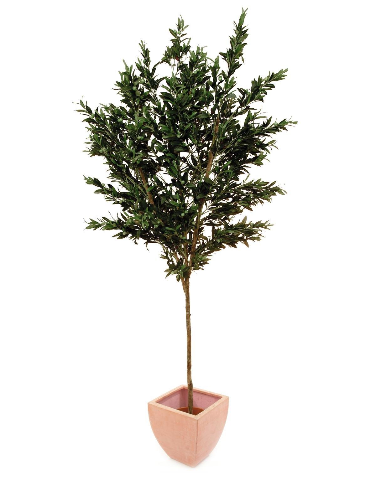 olive-artificiel-250cm