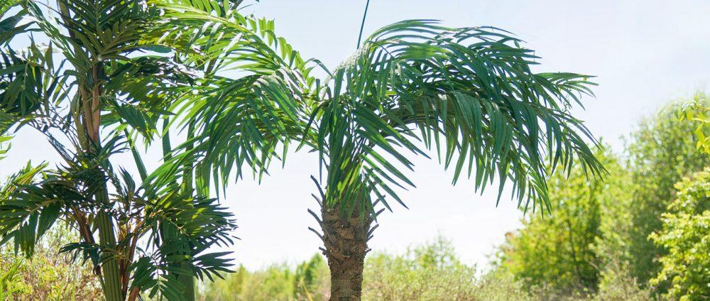 blog-article-palmier