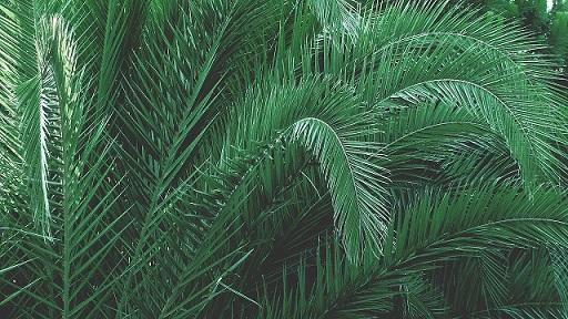 pourquoi-opter-pour-les-palmiers-artificiels