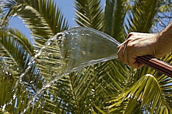 comment-arroser-un-palmier-en-pleine-terre