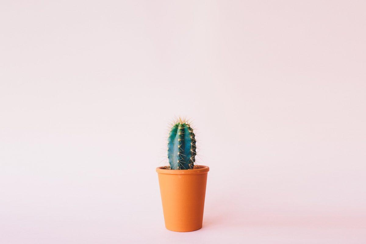 avantages-cactus-artificiels.