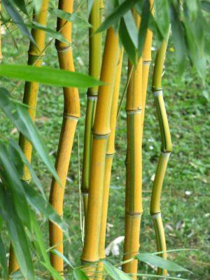bambous-zen-ambiance