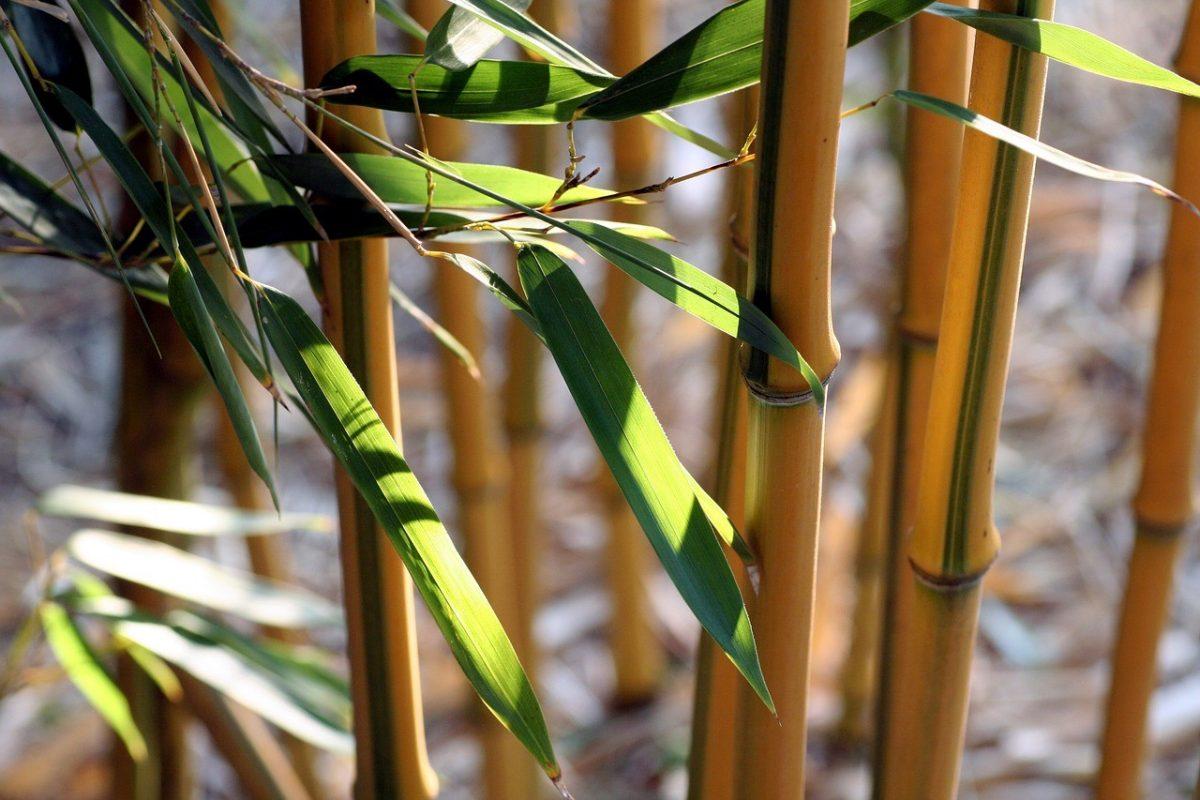comment-creer-ambiance-zen-bambous-artificiels