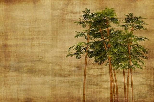 quel-bambou-choisir.