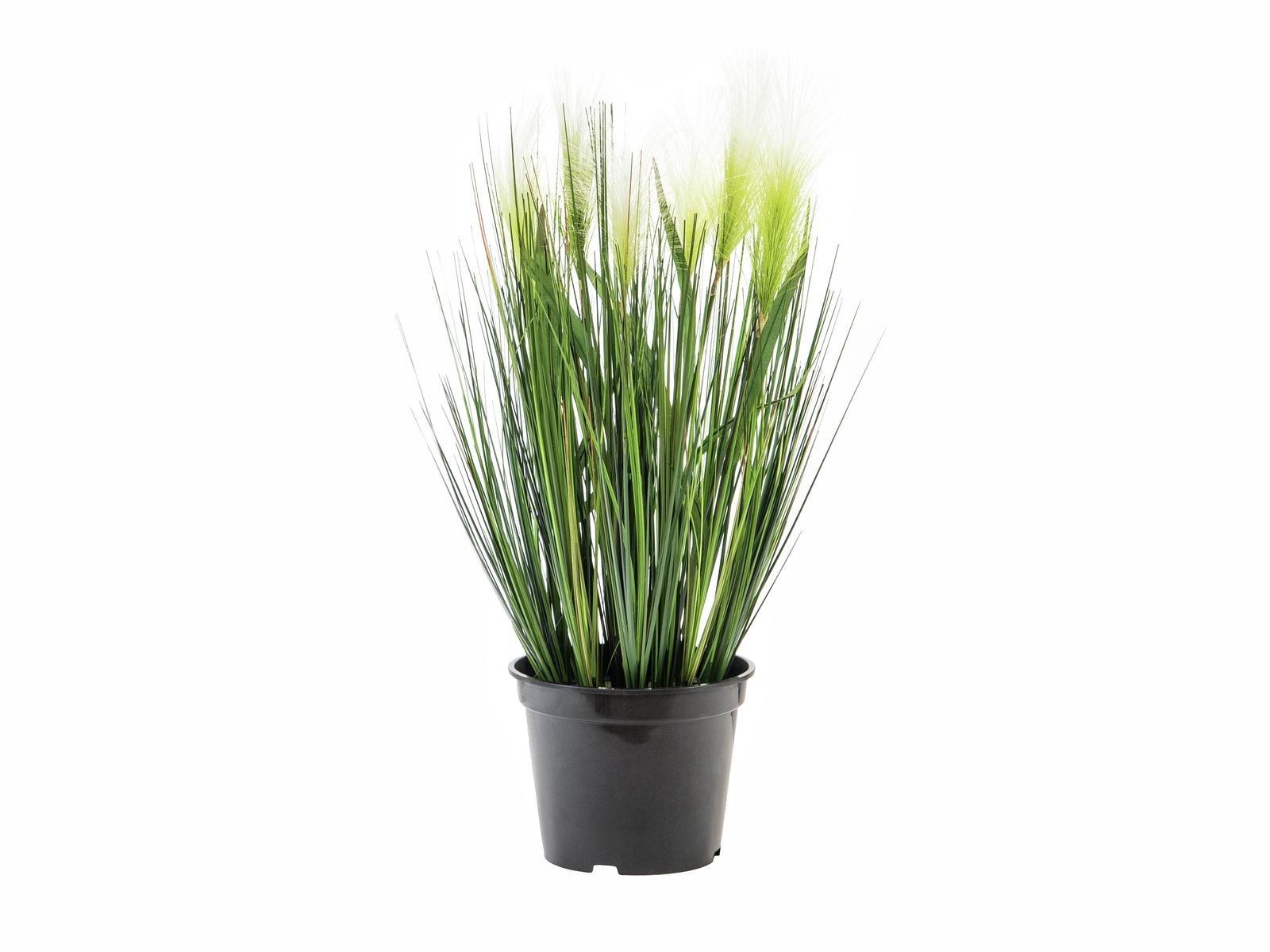 herbe-de-la-pampa-artificielle